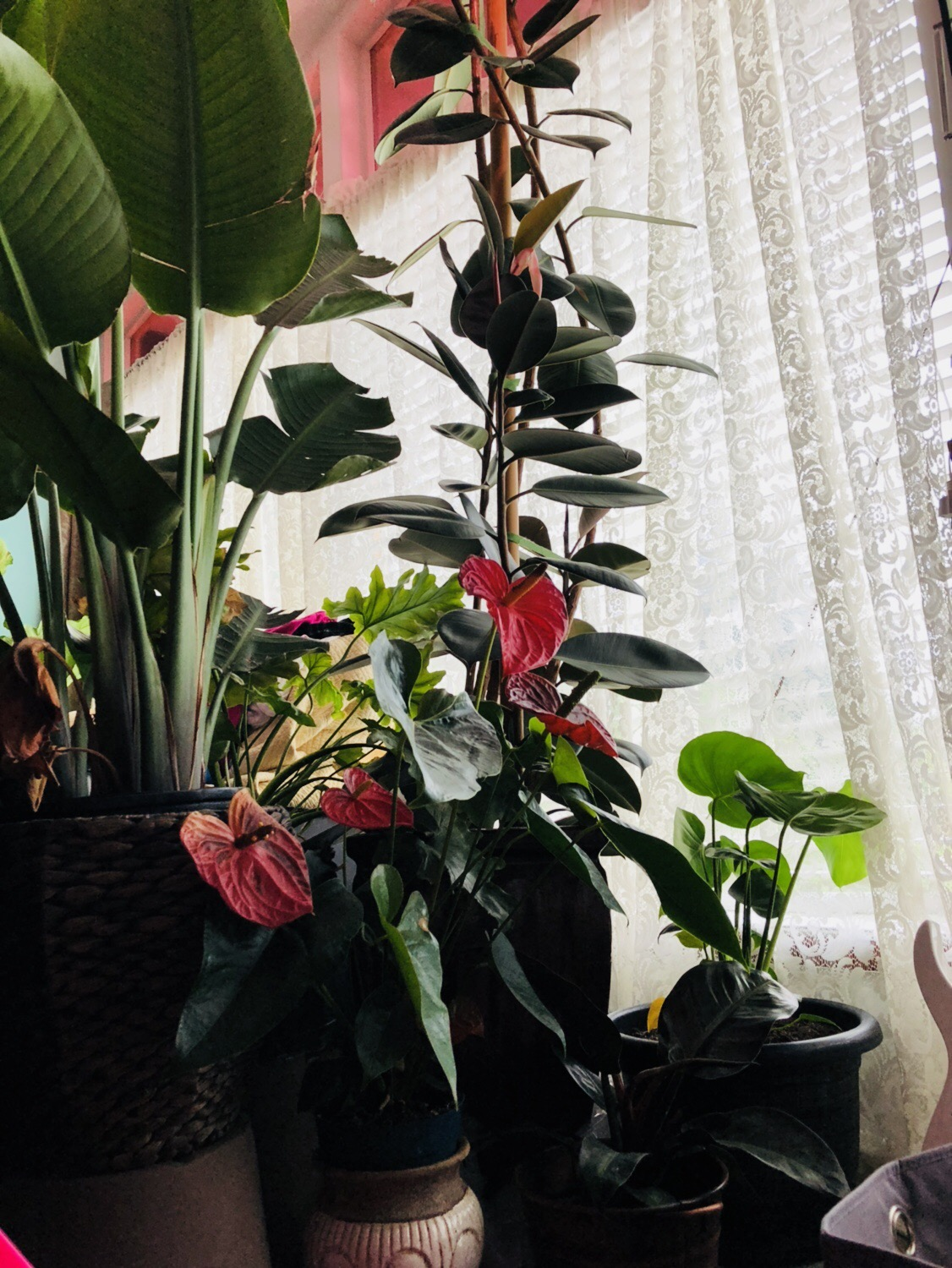 Are Plants Harmful or Helpful in the Bedroom | UBC Botanical