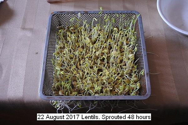 lentils%20009_std.jpg