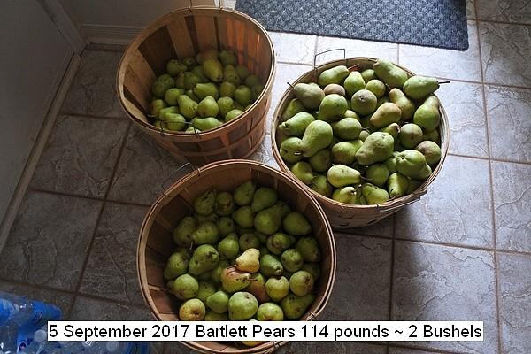 pears%200016_std.jpg