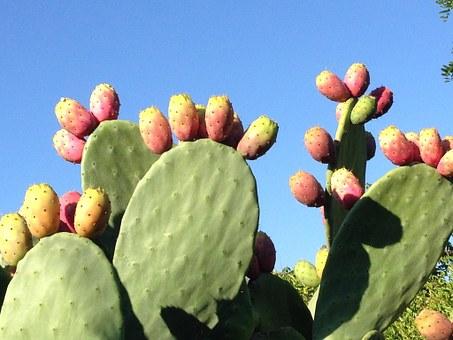 prickly-pear-555530__340.jpg